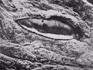 Veľké záhady: Noemova archa na Ararate -dokument