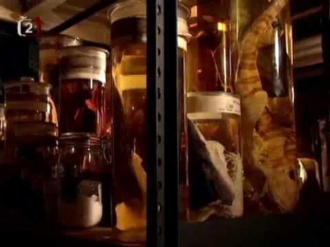 Jezerní příšery / Nadpřirozené jevy ve světle vědy -dokument