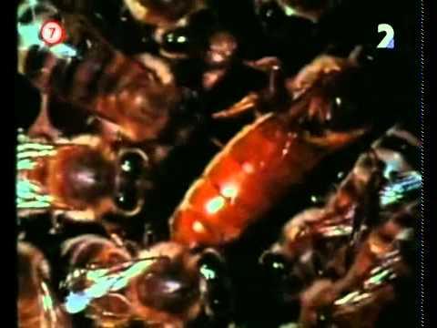 Veľké záhady: Nebezpečný hmyz -dokument