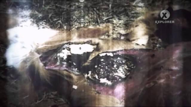 Akta UFO časť:3  Experimenty mimozemšťanů – Odhalení -dokument