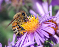 Včela jménem June -dokument