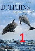 Delfíni očima špionážních kamer 1.část -dokument