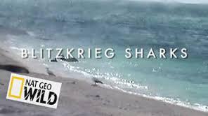 Útoční žraloci -dokument