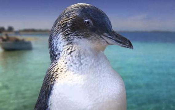 Ráj tučňáků -dokument