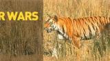 Tygří války -dokument