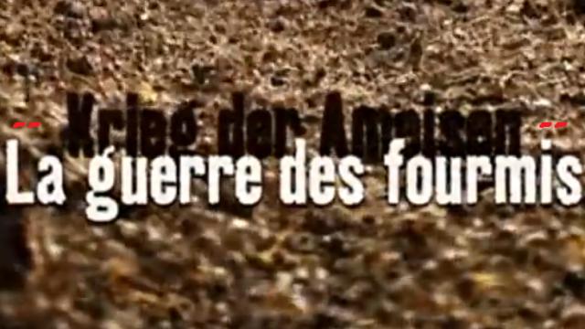 Mravenčí války -dokument