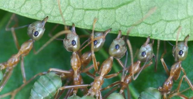 V říši stromových mravenců -dokument