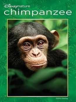 Šimpanz -dokument