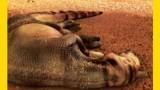 Dinosauří mumie -dokument