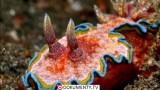 Moře plné nestvůr -dokument