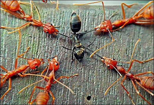 Mravenci útočí -dokument