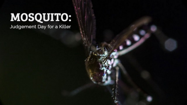 Komáři: soudný den pro zabijáky -dokument