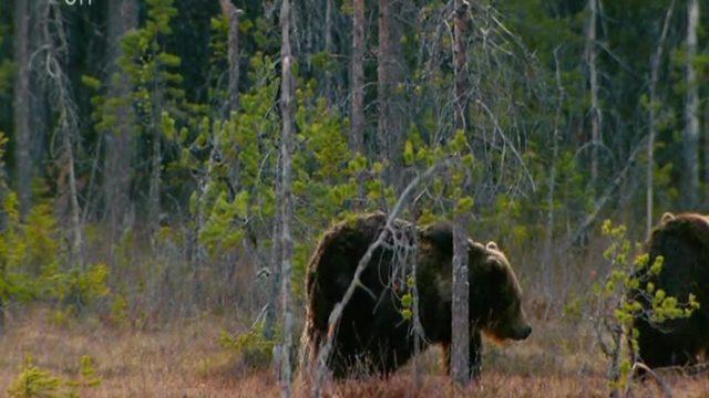 Medvědí abeceda -dokument