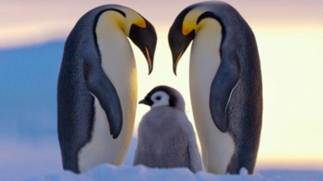 Antarktida: Příběhy z konce světa -dokument