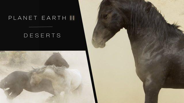 Zázračná planeta II / Planéta Zem II / Planet Earth 2 / část 4: Púšte -dokument