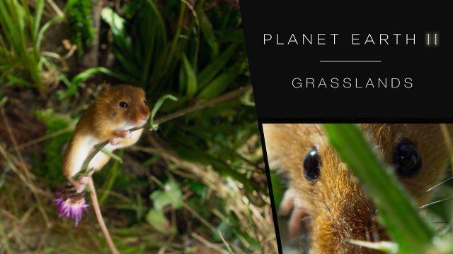 Zázračná planeta II / Planéta Zem II / Planet Earth 2 / část 5: Pláně / Lúky a pastviny -dokument