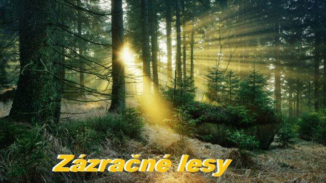 Zázračné lesy -dokument