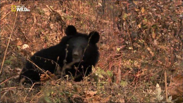 Ruská divočina: Tajuplný les -dokument
