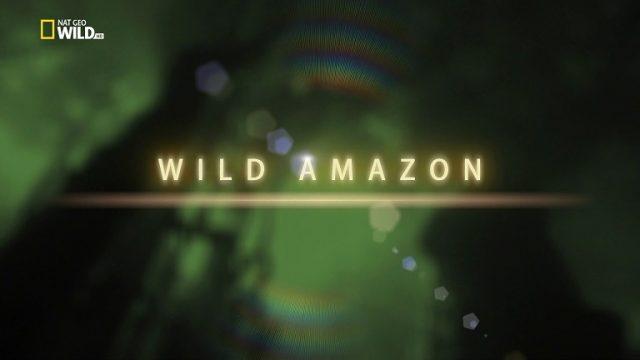 Divoká Amazonie / část 1: Kolébka života –dokument