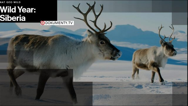 Rok v sibiřské divočině -dokument