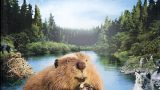 Bobři , cesta divočinou -dokument