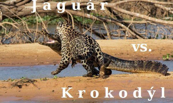 Jaguár vs. krokodýl -dokument