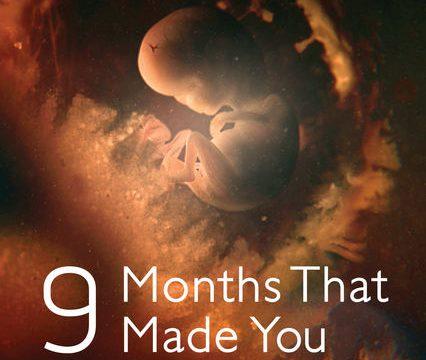 Záhadných devět měsíců / díl 1: Prvních 8 týdnů –dokument
