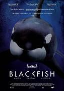 Kosatky / Blackfish -dokument
