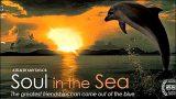 Duše v moři -dokument