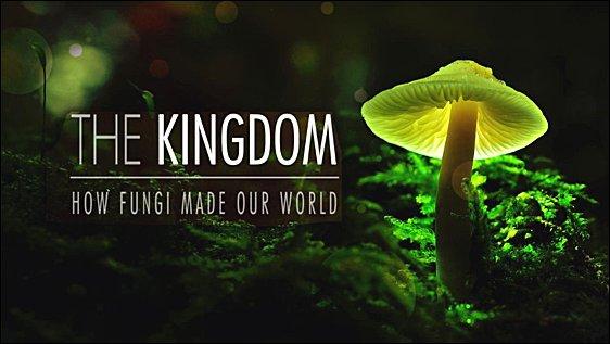 Jak houby stvořily náš svět -dokument