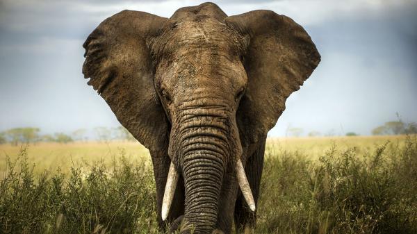Co žere slona -dokument