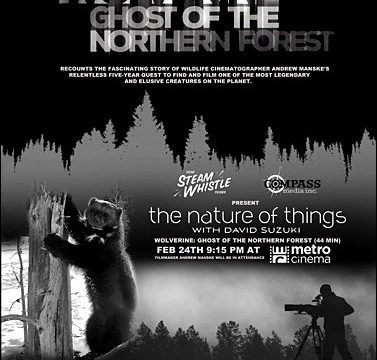 Rosomák: Přízrak severních lesů -dokument