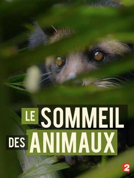 Jak spí zvířata v přírodě -dokument