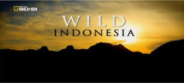 Krásy divoké Indonésie (komplet 1-3) -dokument
