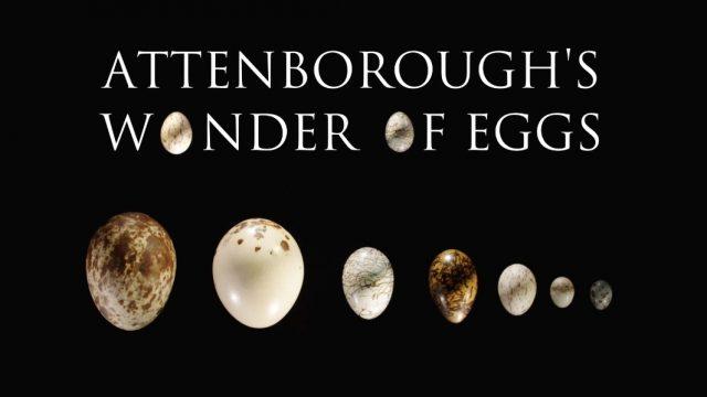 David Attenborough: Zázrak jménem vejce -dokument