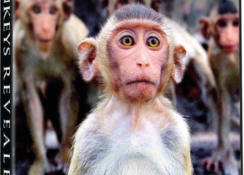 My, chytří primáti / Úžasný svět opic (komplet 1-3) -dokument
