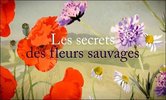 Tajemství divokých květin (komplet 1-6) -dokument