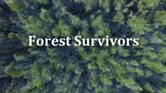 Lesní hrdinové -dokument