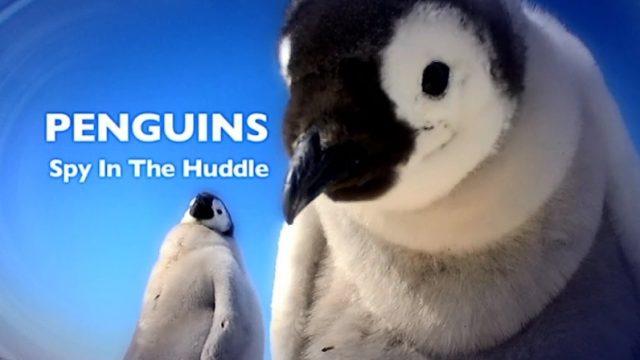 Tučňáci – život z blízka (komplet 1-3) -dokument