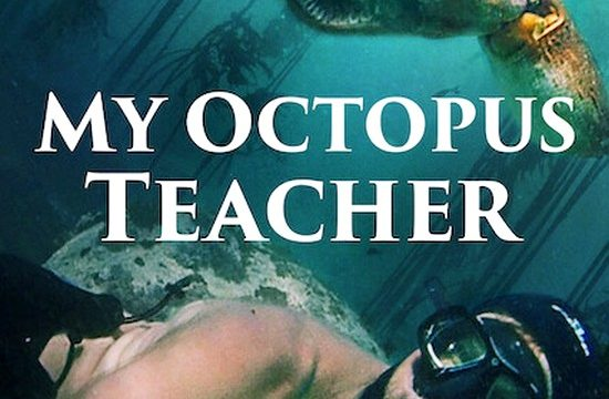 Moje učitelka chobotnice / My Octopus Teacher -dokument </a><img src=http://dokumenty.tv/eng.gif title=ENG> <img src=http://dokumenty.tv/cc.png title=titulky>