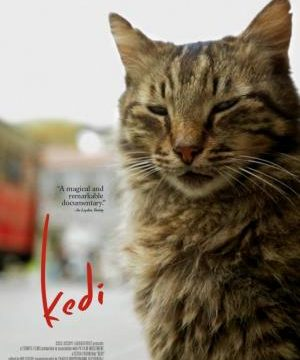 Kedi / Nine Lives: Cats in Istanbul -dokument </a><img src=https://dokumenty.tv/wp-content/uploads/2020/11/tur.gif title=TR> <img src=http://dokumenty.tv/cc.png title=titulky>