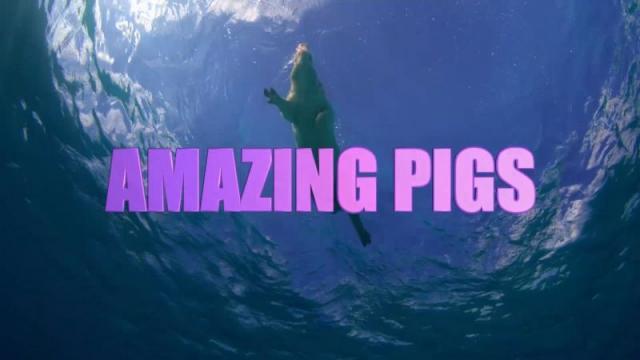 Úžasná prasata -dokument