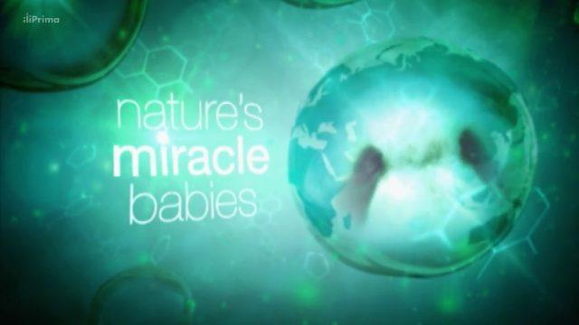 Zázračná mláďata (komplet 1-5) -dokument