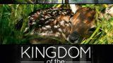 Království lesa / Lesní království -dokument