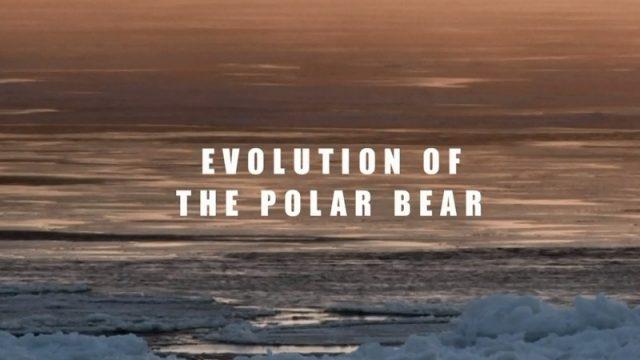 Proměny ledního medvěda / Přežijí lední medvědi? -dokument