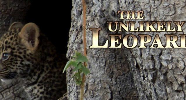 Neobyčejný levhart -dokument