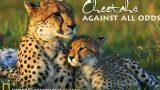 Gepardi – navzdory nepřízni osudu -dokument