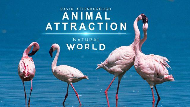 Láska a partnerství v říši zvířat -dokument