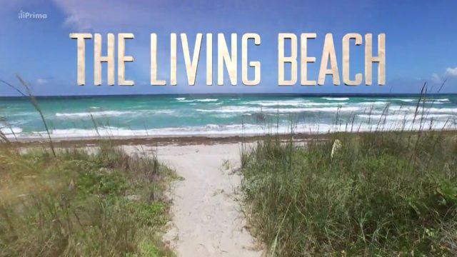 Živoucí pláže (komplet 1-6) -dokument